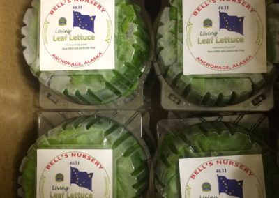 VHH Packaged lettuce at Bells Nursery