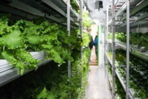 Hydroponic System in a shipping container