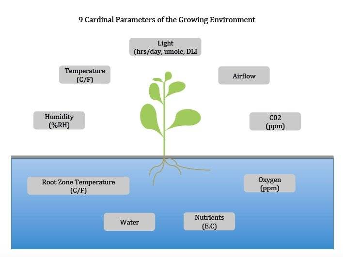 Essential elements in a hydroponic garden.